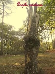 """Land Arts"""" mon arbre"""""""