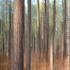 une photo de la Forêt des Landes
