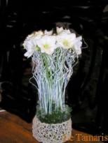 Composition d'amaryllis blanc