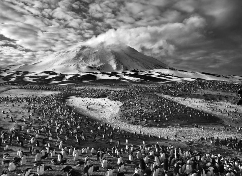 sebastiao-salgado-zavodovski-island-south-sandwich-islands-2009