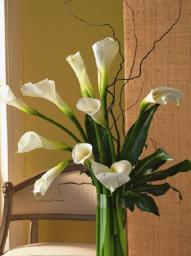 Bouquet d'Arum aussi appelé calla dans le sud