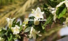 Décoration Guirlande de fleurs
