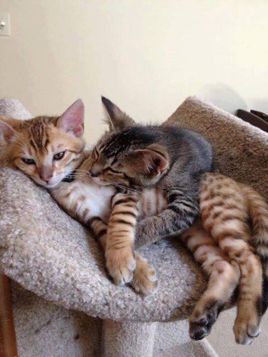 tendresses de chats