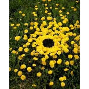 land art mandala jaune en fleurs jaunes