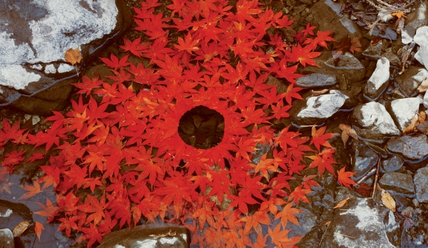 Land'art mandala en feuillage rouge