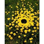 Land'art mandala jaune