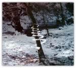 Land'art Structure de glace autour d'un arbre
