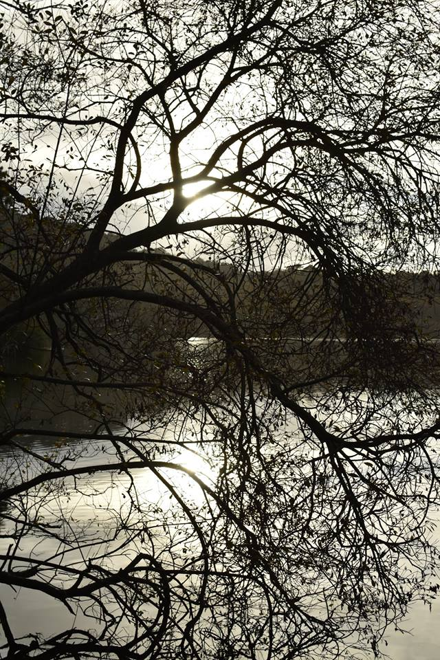 photo clair obscur d'arbres @Alicia Snicker