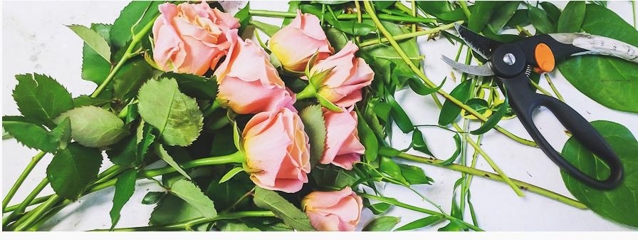 Bannière roses et sécateur