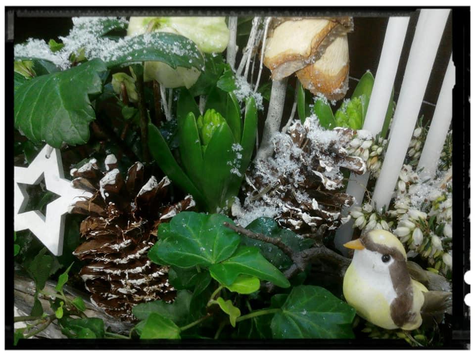 Atelier plantes.. mini jardin d'hiver