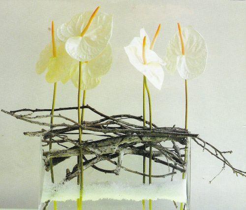 Composition d'anthurium blanc moderne