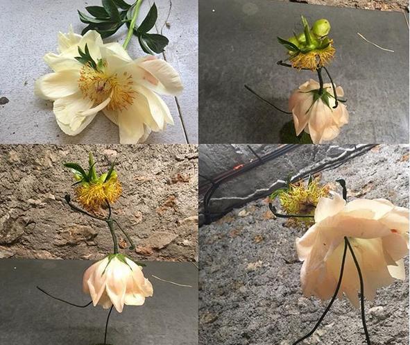 Poupée en pétales de fleur de pivoine.