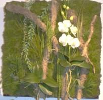 cadre tableau végétal phal avec mousse