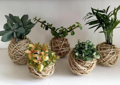 Plantes grasses en kokedama ficelle