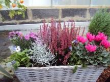 Coupe de plantes d'automne ou d'hiver